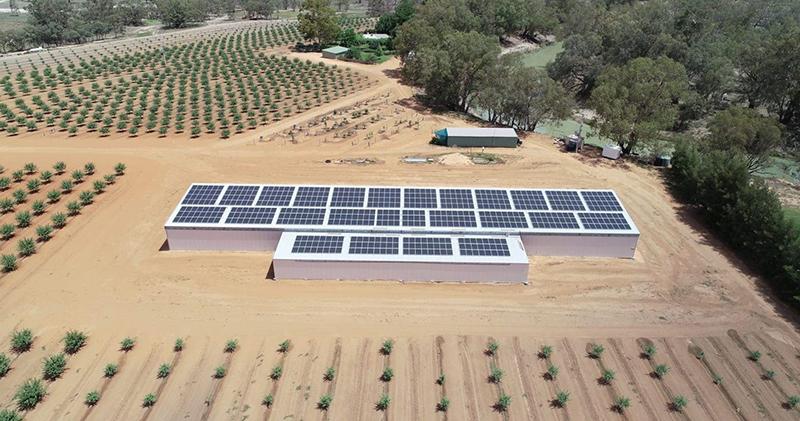 Australian Bore Pumps Almond Solar Bore Pumps Irrigation 1